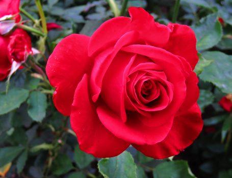 Homepage olympiad flower