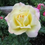 Homepage peace flower